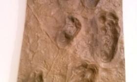 アウストラロピテクスの足跡