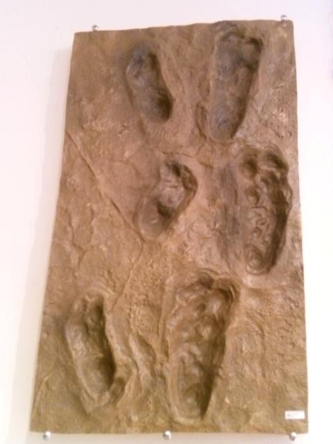 アウストラロピテクスの足跡(レプリカ)