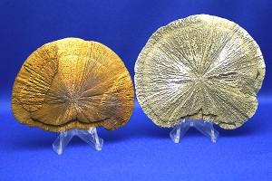パイライト・サン(放射状に結晶した黄鉄鉱)